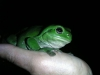 Friendly Tree Frog