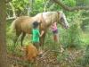 Sunshine Coast Horse Riding