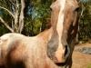 Sassy the Horse